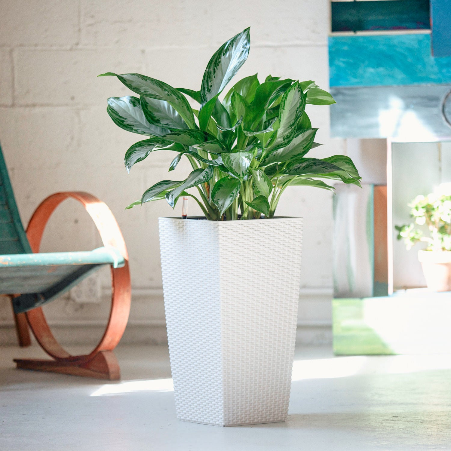 Aglaonema plant potted in Lechuza Cubico Cottage white planter - My City Plants