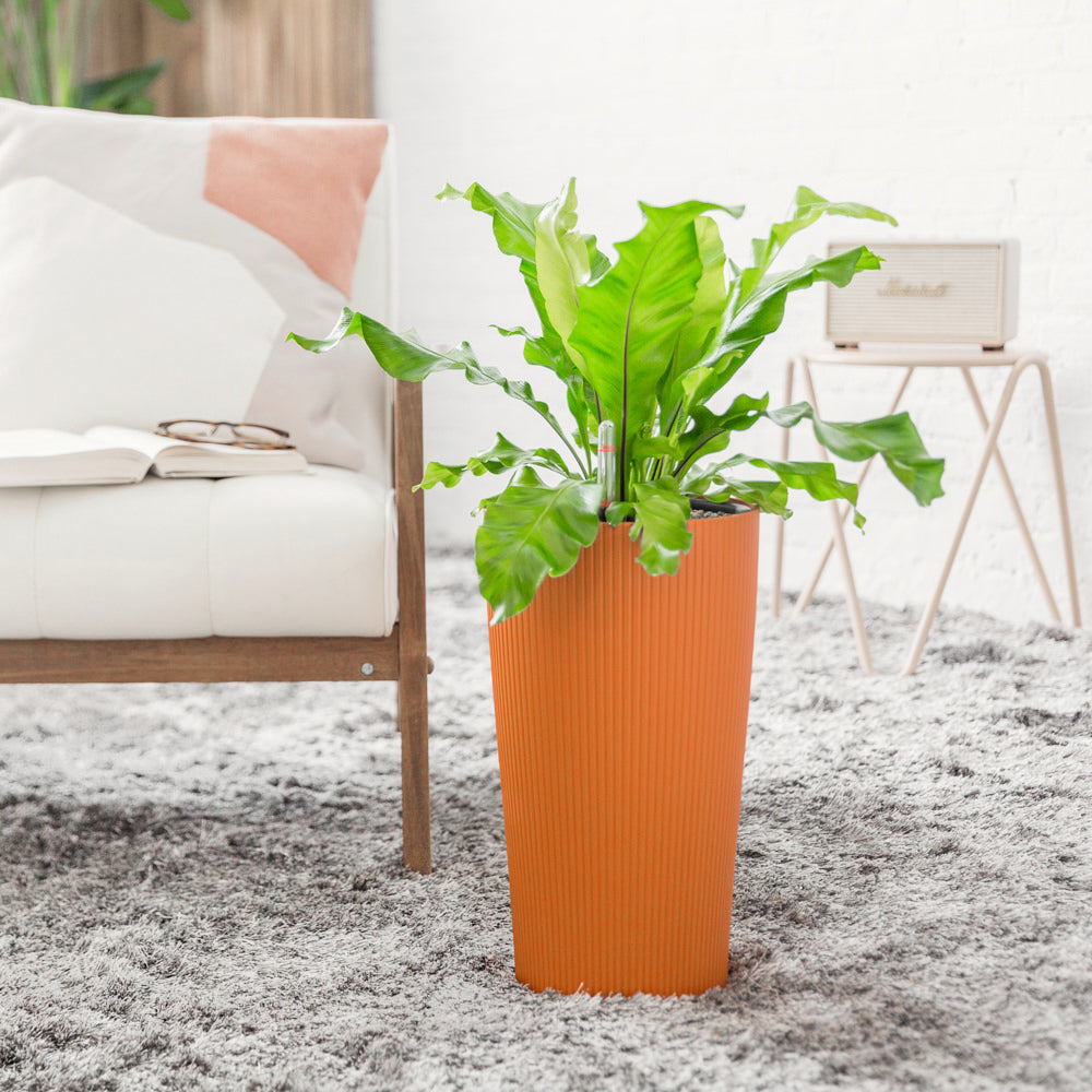 Bird's Nest Fern Potted In Lechuza Cilindro Sunset Orange Planter - Shop Online - My City Plants