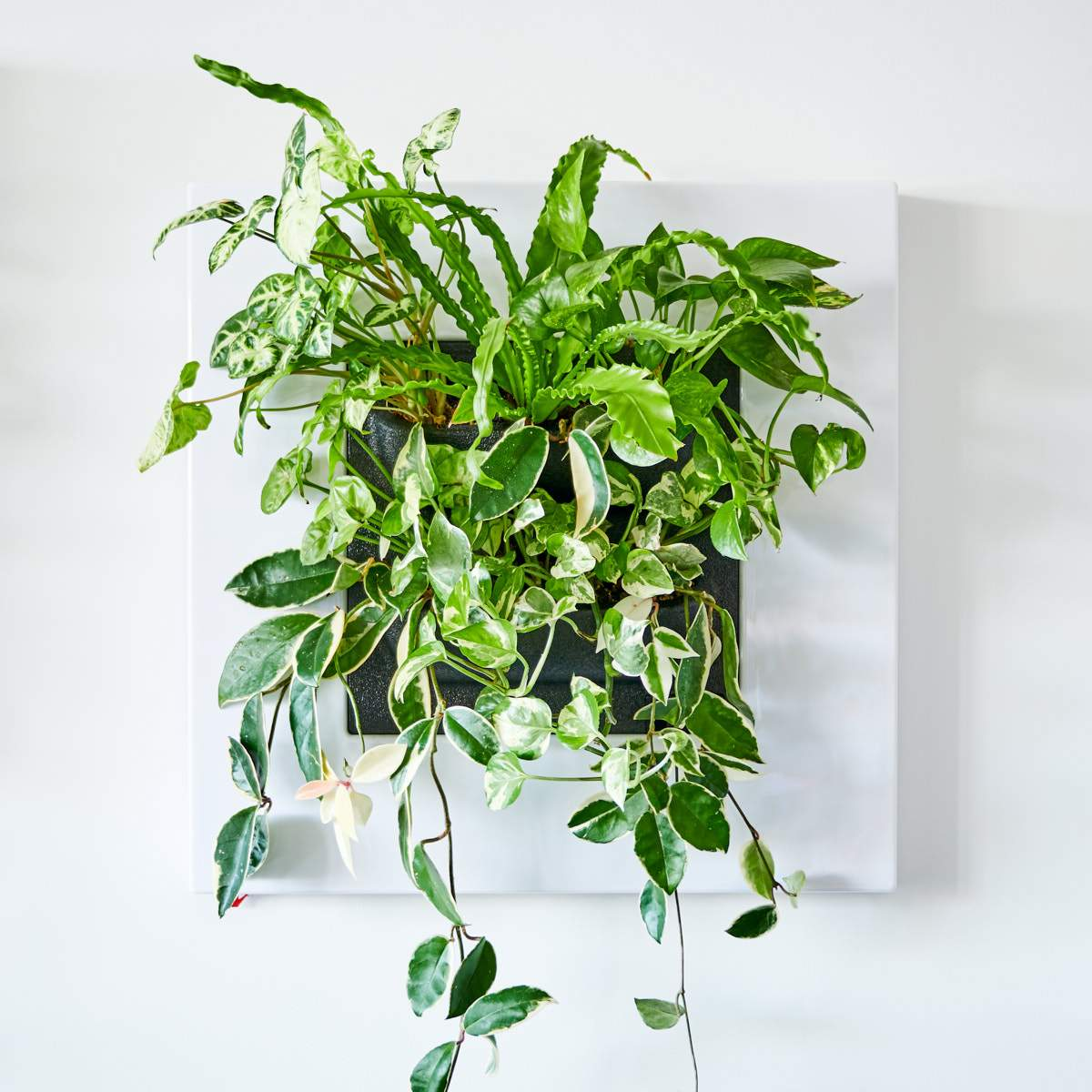 LIVE FRAME WITH PLANTS