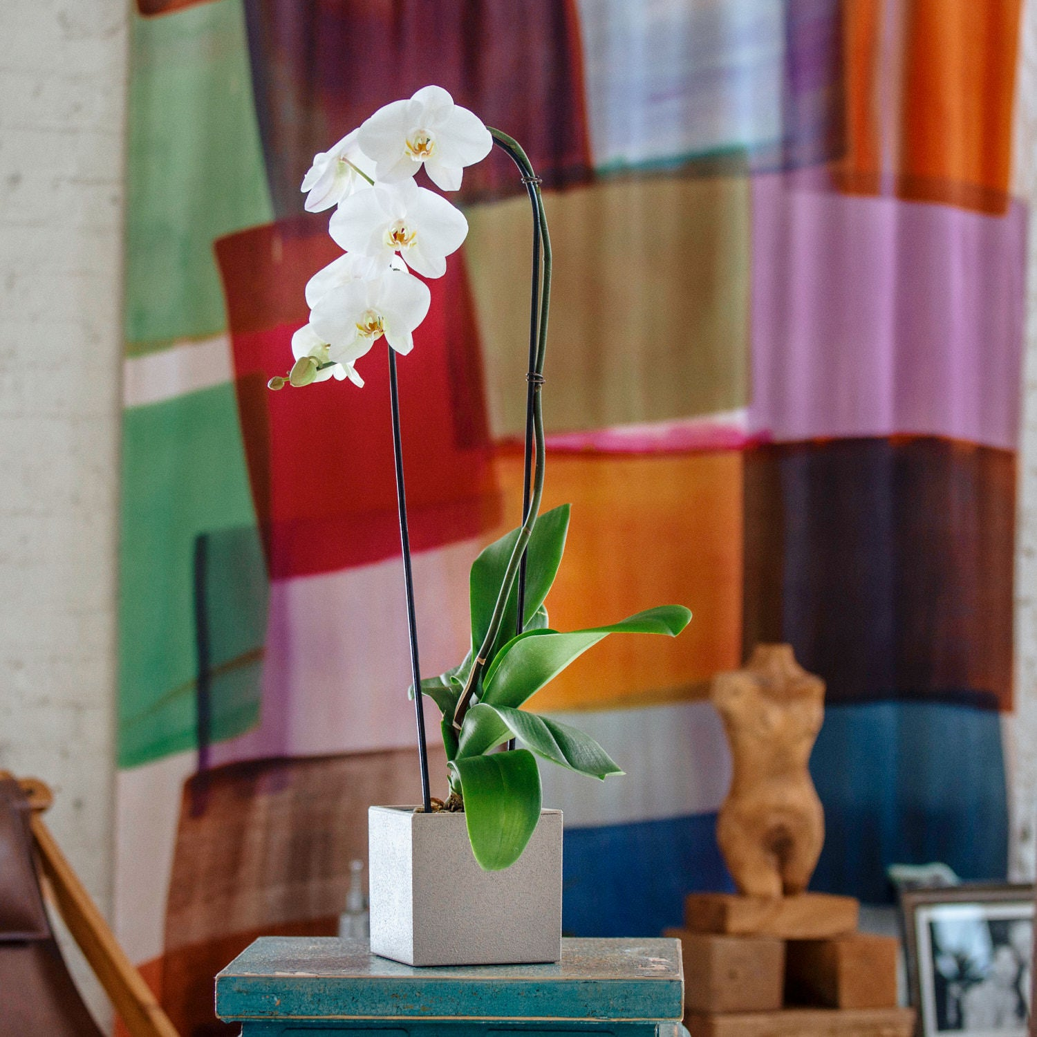 Phalaenopsis Orchid In Lechuza Canto 14 Beige Planter | My City Plants