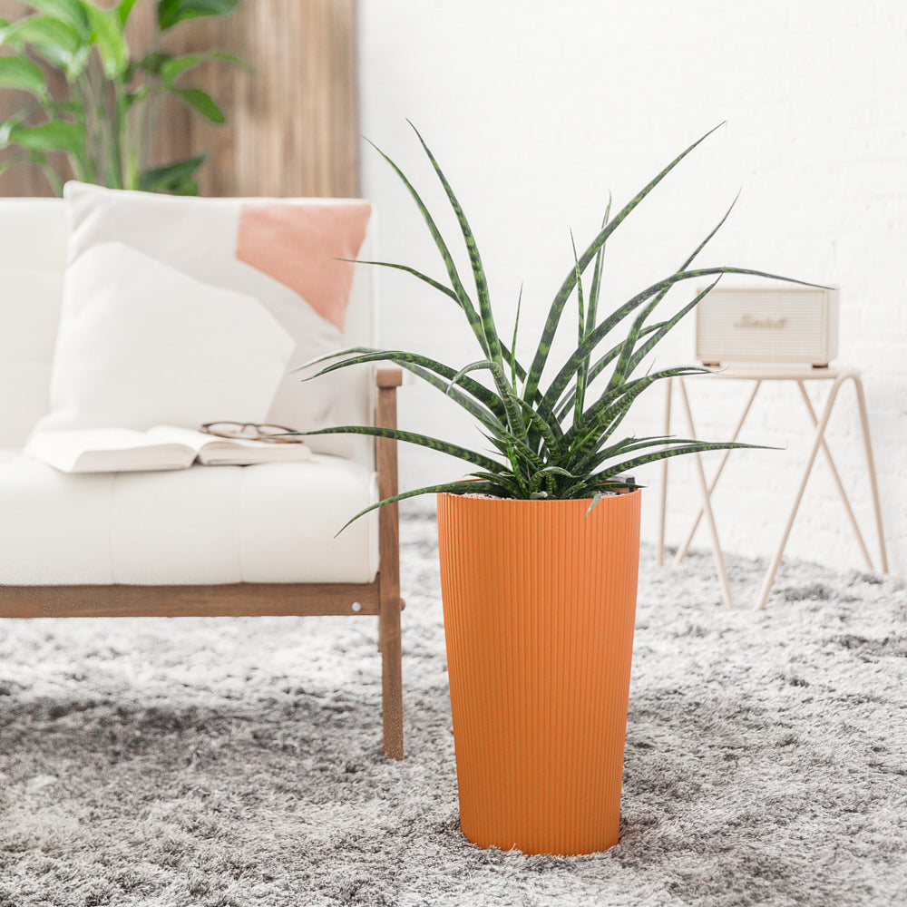 Sansevieria Fernwood Punk Potted In Lechuza Cilindro Sunset Orange Planter - Shop Online - My City Plants