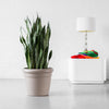 Sansevieria Plant Potted In Rustico Sand Beige Color Planter - Shop Online - My City Plants