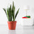 Sansevieria Plant Potted In Rustico Terracotta Color Planter - Shop Online - My City Plants