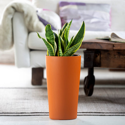 Snake plant potted in Lechuza Cilindro orange self-watering planter - My City Plants