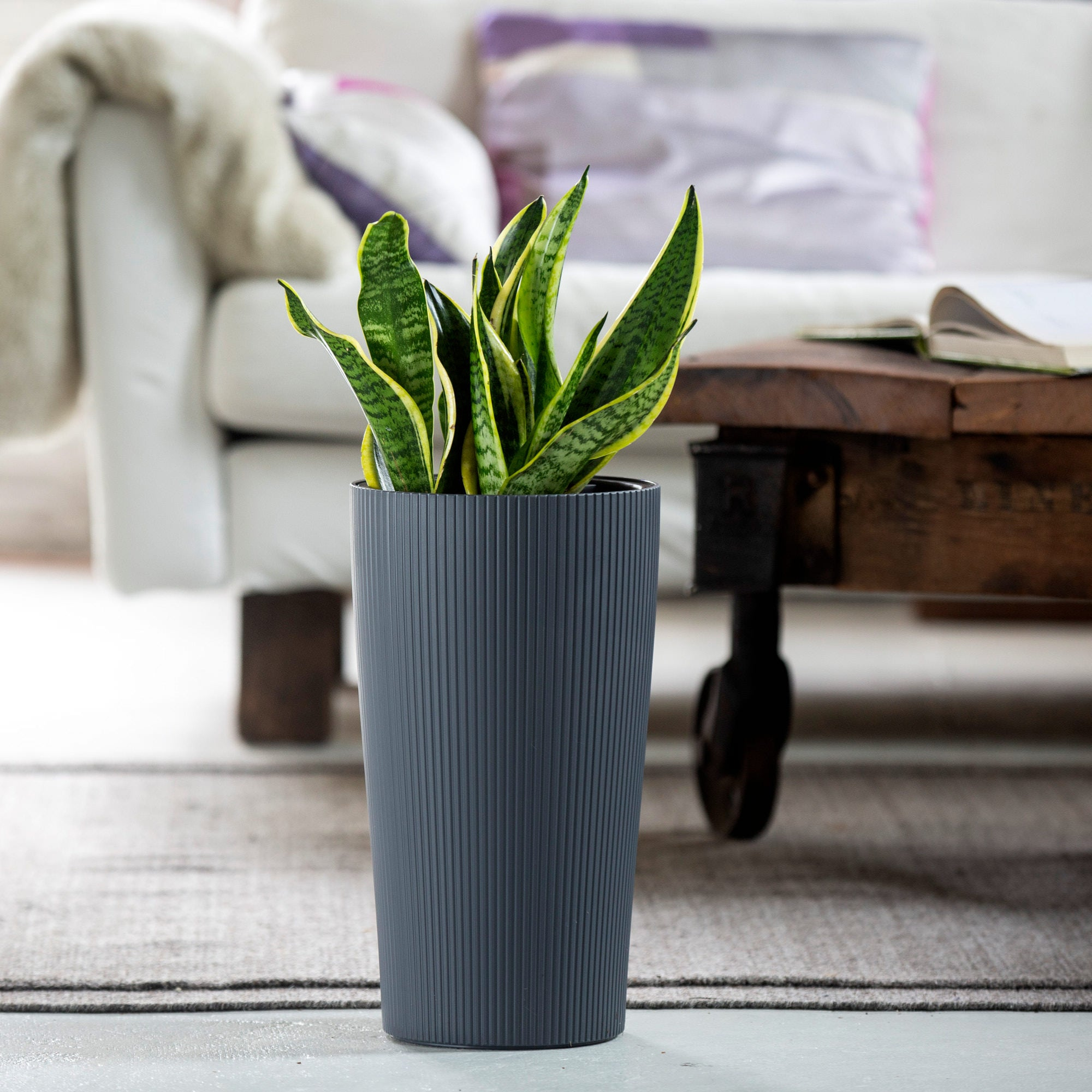 Snake plant potted in Lechuza Cilindro slate self-watering planter - My City Plants