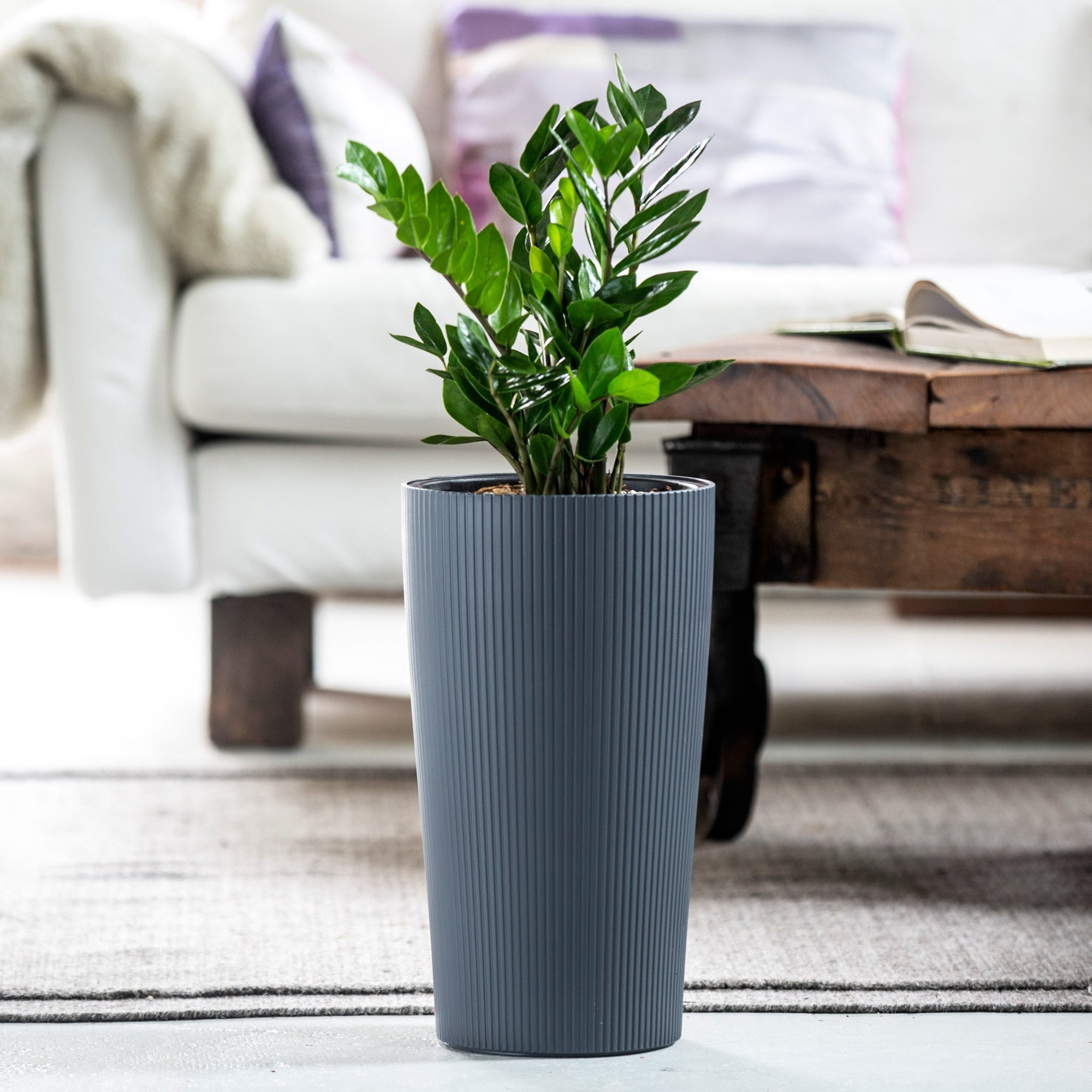 ZZ plant potted in Lechuza Cilindro slate self-watering planter - My City Plants