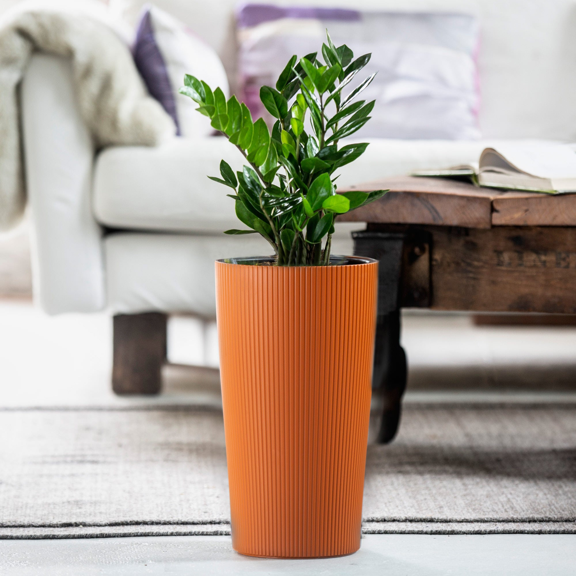 ZZ plant potted in Lechuza Cilindro orange self-watering planter - My City Plants