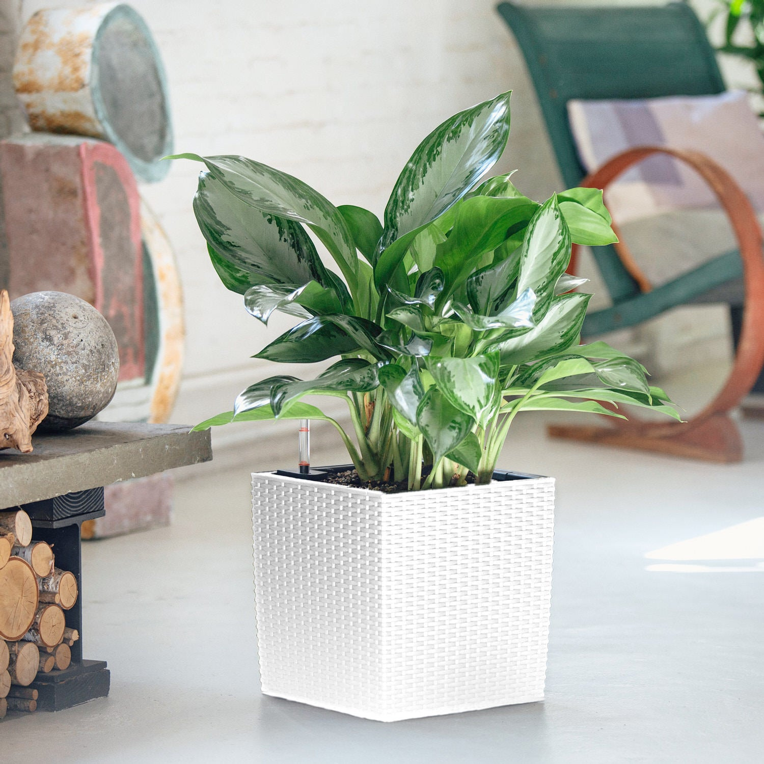 Aglaonema Potted Lechuza Cube Cottage White Planter | My City Plants