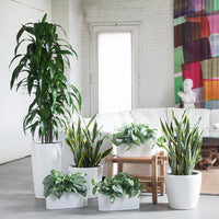 Plant Bundles - Air Purifying Bundle - My City Plants