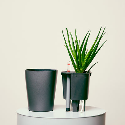 Aloe Deltini Charcoal Metallic