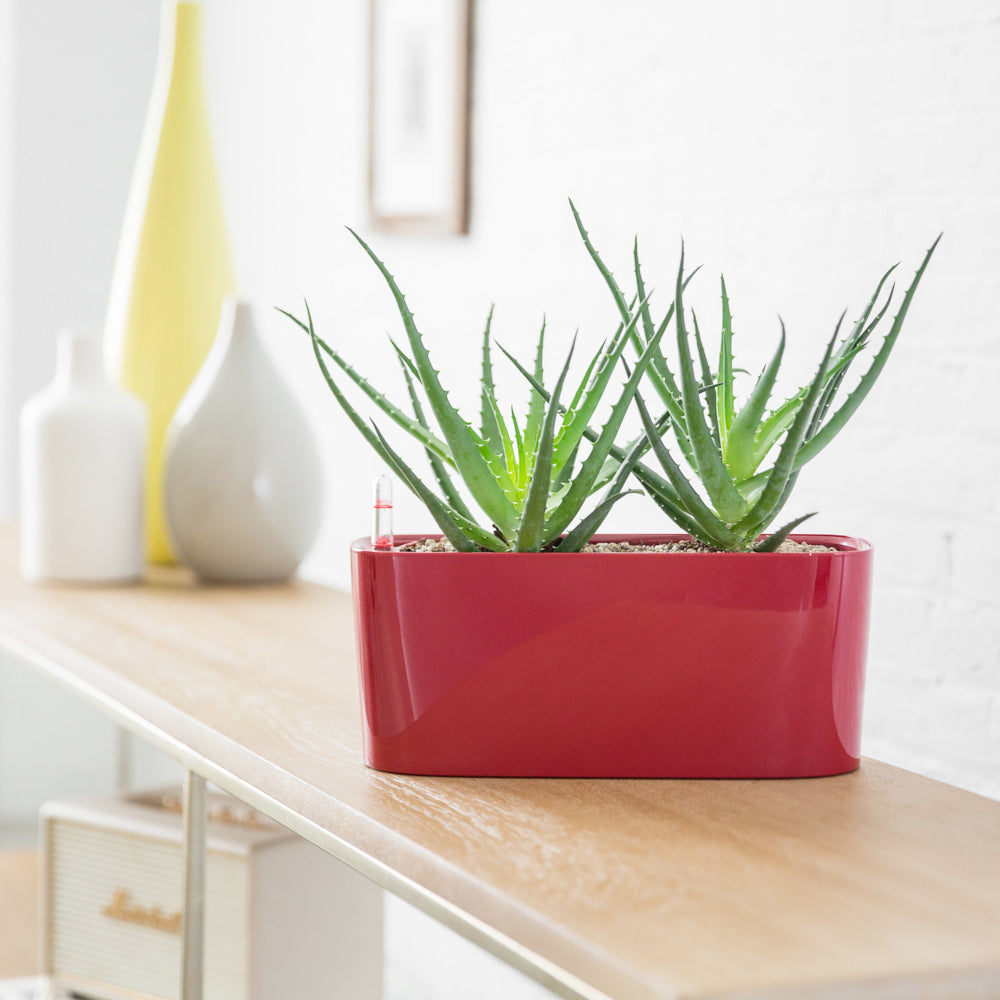 Aloe Potted In Lechuza Windowsill Mini Red Planter | My City Plants