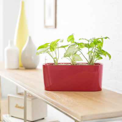 Arrowhead Windowsill Mini Red