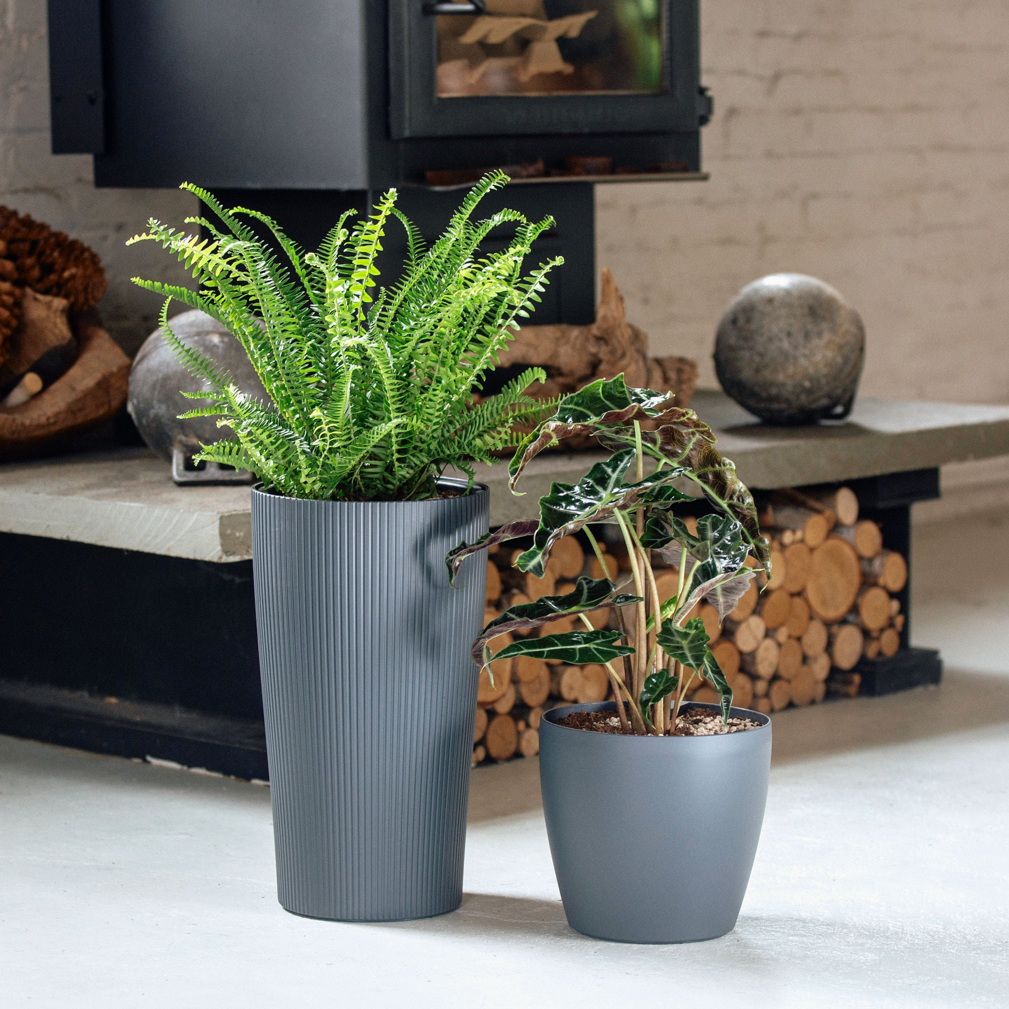 Astoria Plant Bundle In Self-watering Slate Planters