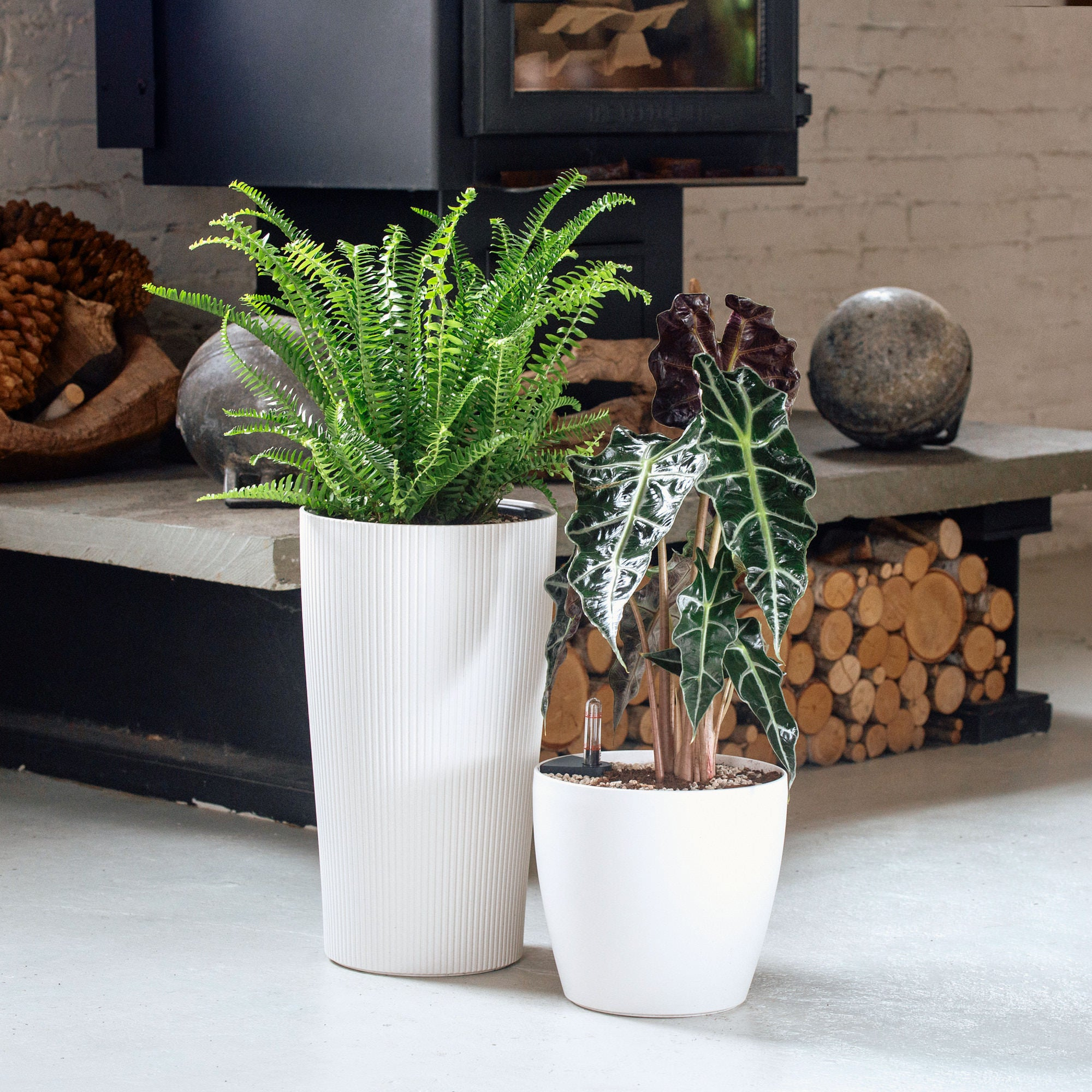 Astoria Plant Bundle In Self-watering Planters