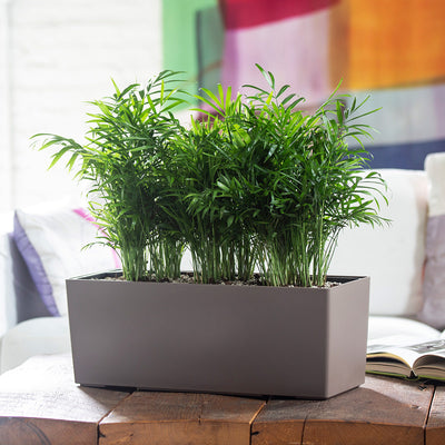 Lechuza Balconera Color 50 Planter - Nutmeg