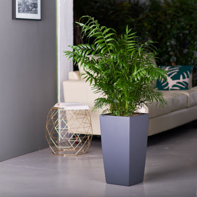 Bella Palm potted in Lechuza Cubico slate planter - My City Plants