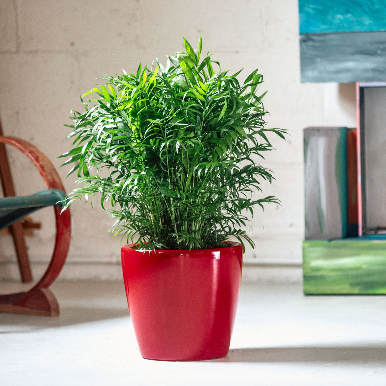 Bella Palm | Lechuza Classico Red Planter | My City Plants
