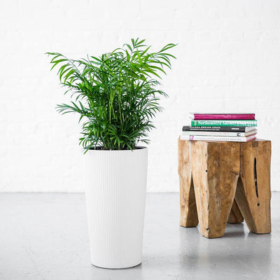 Lechuza Cilindro Self-watering Planter - White