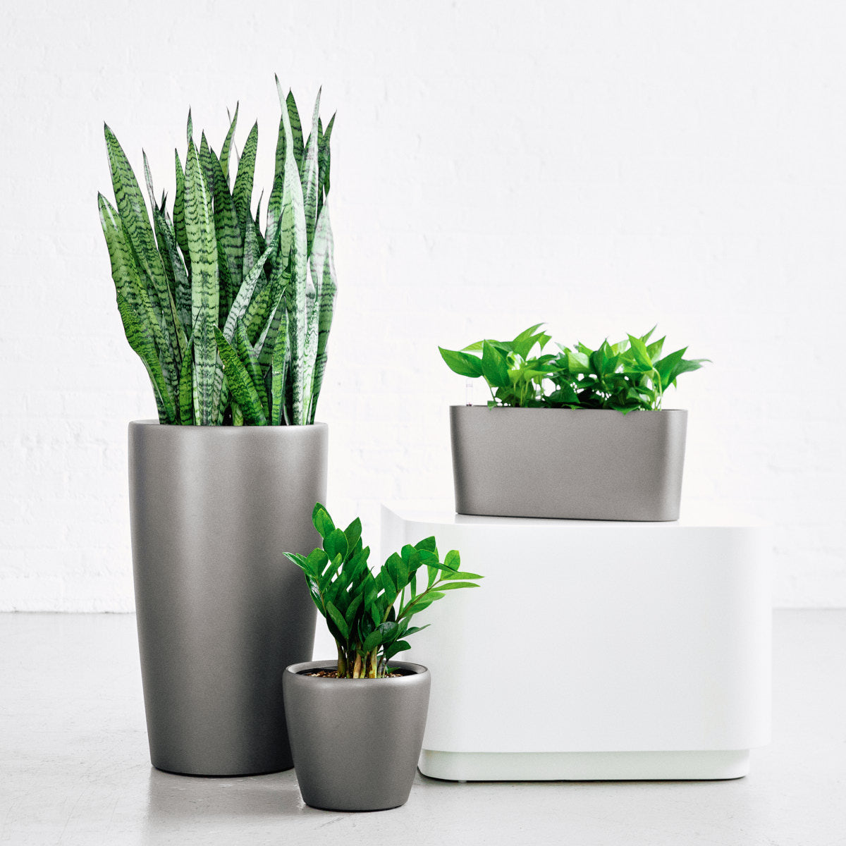 Houseplant bundle for beginners - charcoal metallic