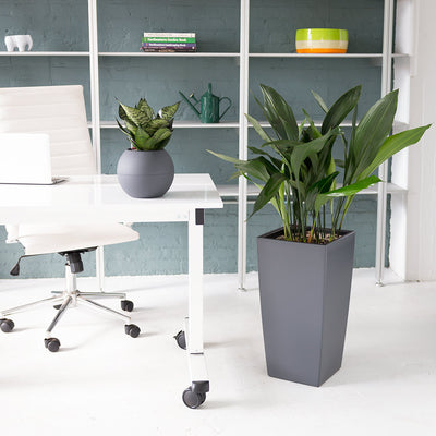 Low Light Plant bundle in slate color planters. Snake plant color will vary from variegated, to silver, to dark green.