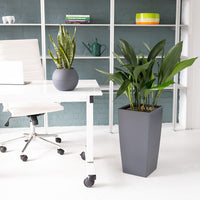 Low Light Plant bundle in slate color planters