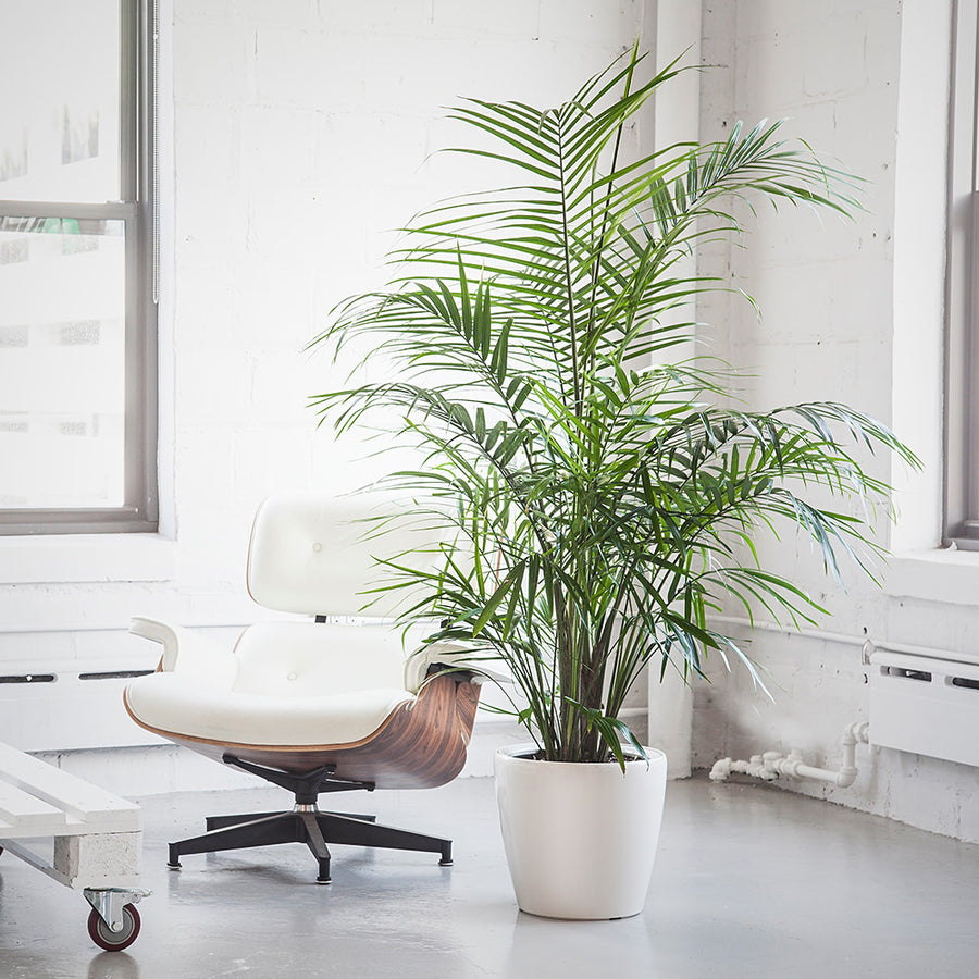 pet friendly plants delivery in nyc jersey city and hoboken 5 to 6. Black Bedroom Furniture Sets. Home Design Ideas