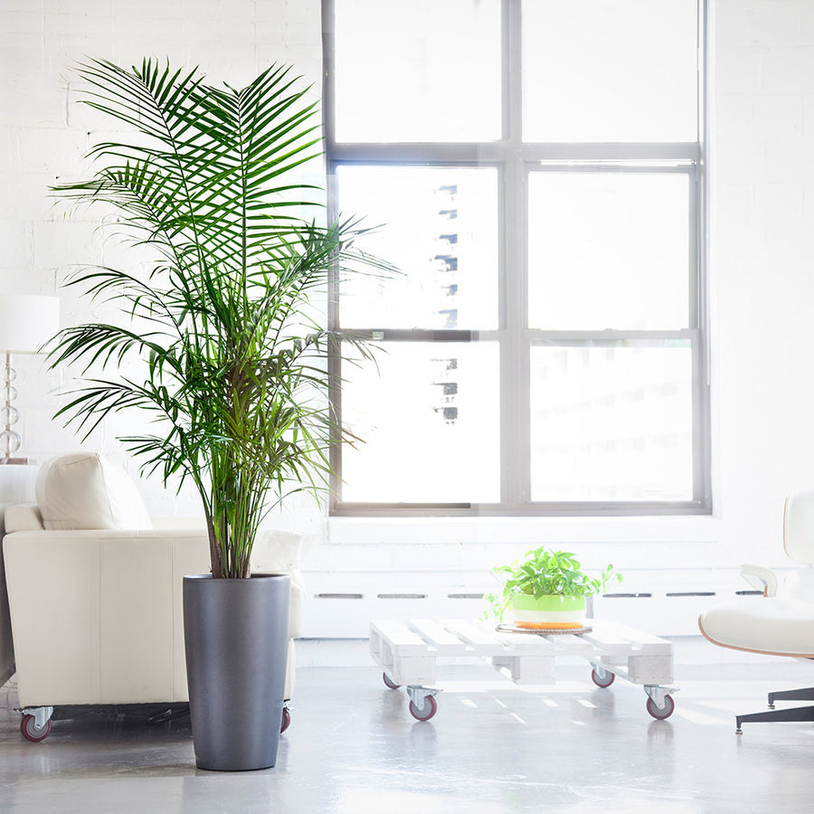 pet friendly plants delivery nyc jersey city edgewater and hoboken 5 to 6. Black Bedroom Furniture Sets. Home Design Ideas
