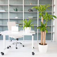 Plant bundle Modern Spin in white planters