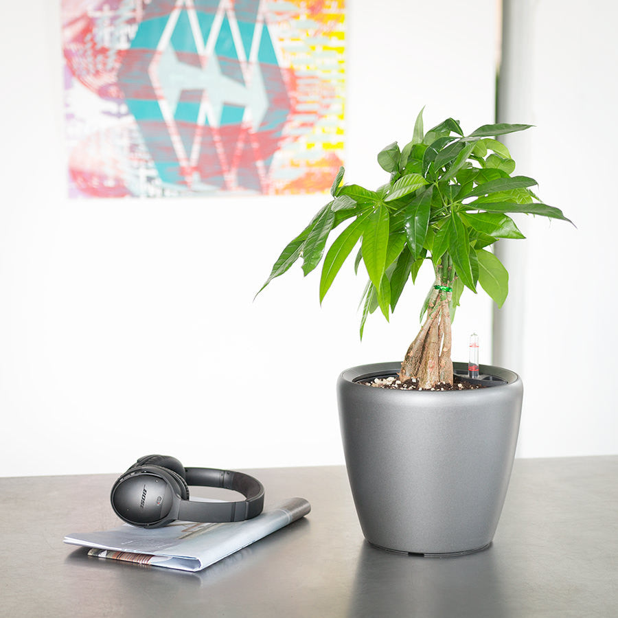 Money Tree Classico Mini Charcoal Metallic