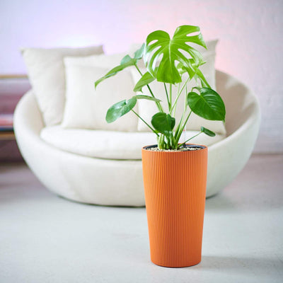 Monstera Deliciosa In Cilindro Orange Planter | My City Plants