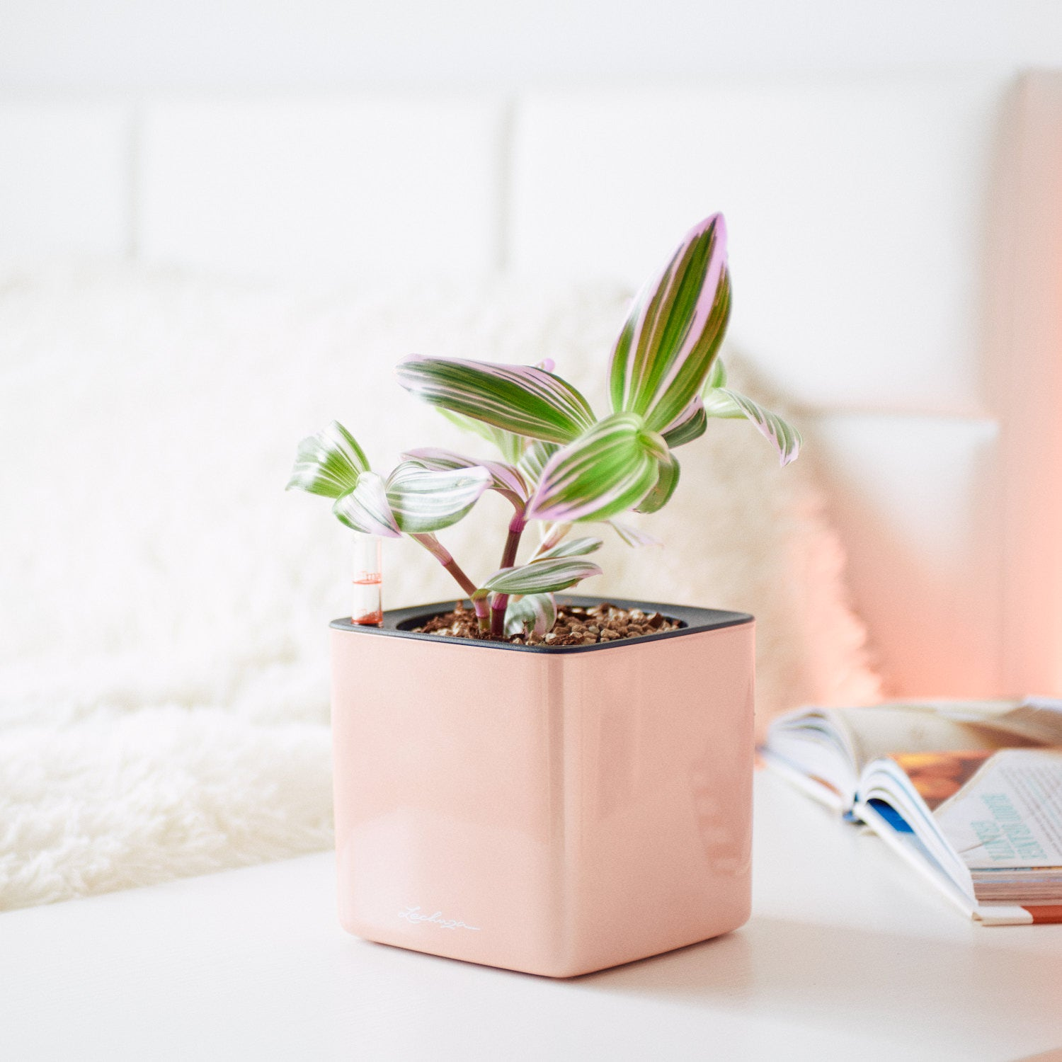 Tradescantia Nanouk In Lechuza Cube Cashmere Planter | My City Plants