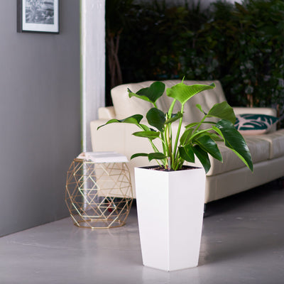 Philodendron Green Congo plant potted in Lechuza Cubico white planter - My City Plants