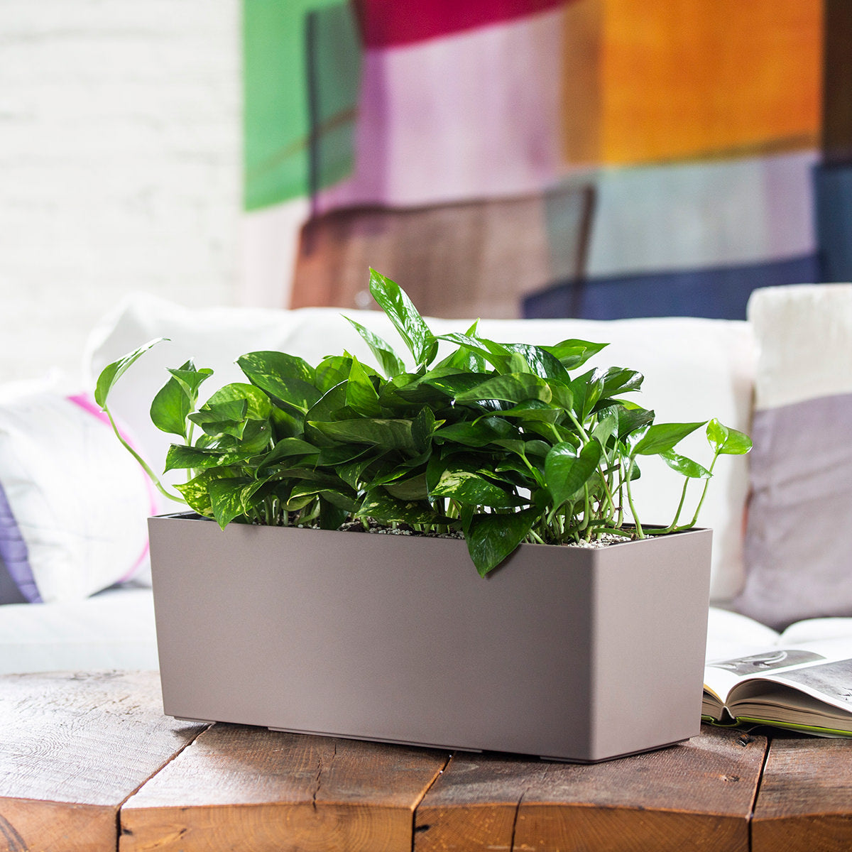 Pothos plant potted in Lechuza Balconera nutmeg planter