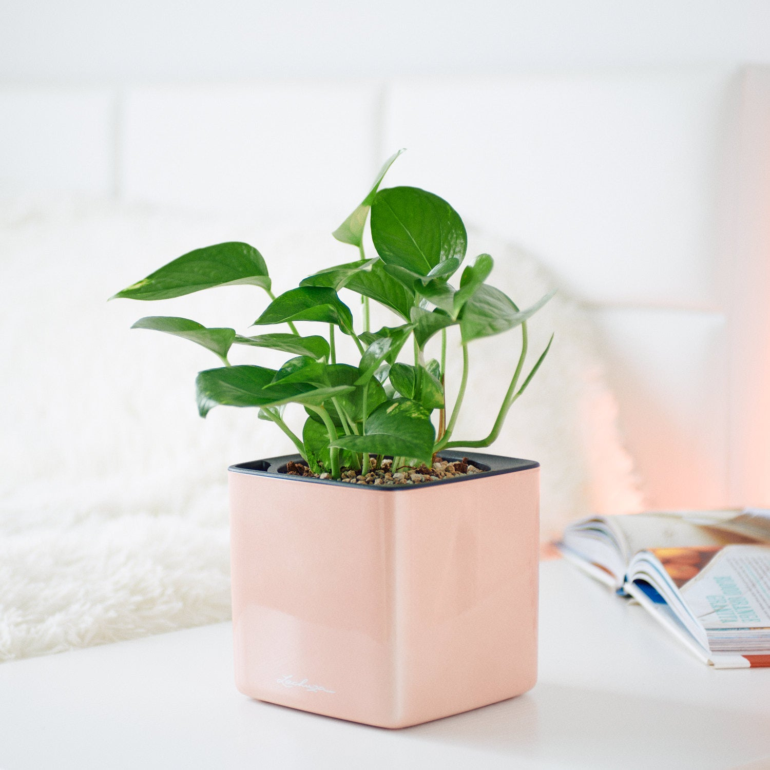 Pothos In Lechuza Cube 14 Glossy Cashmere Planter | My City Plants