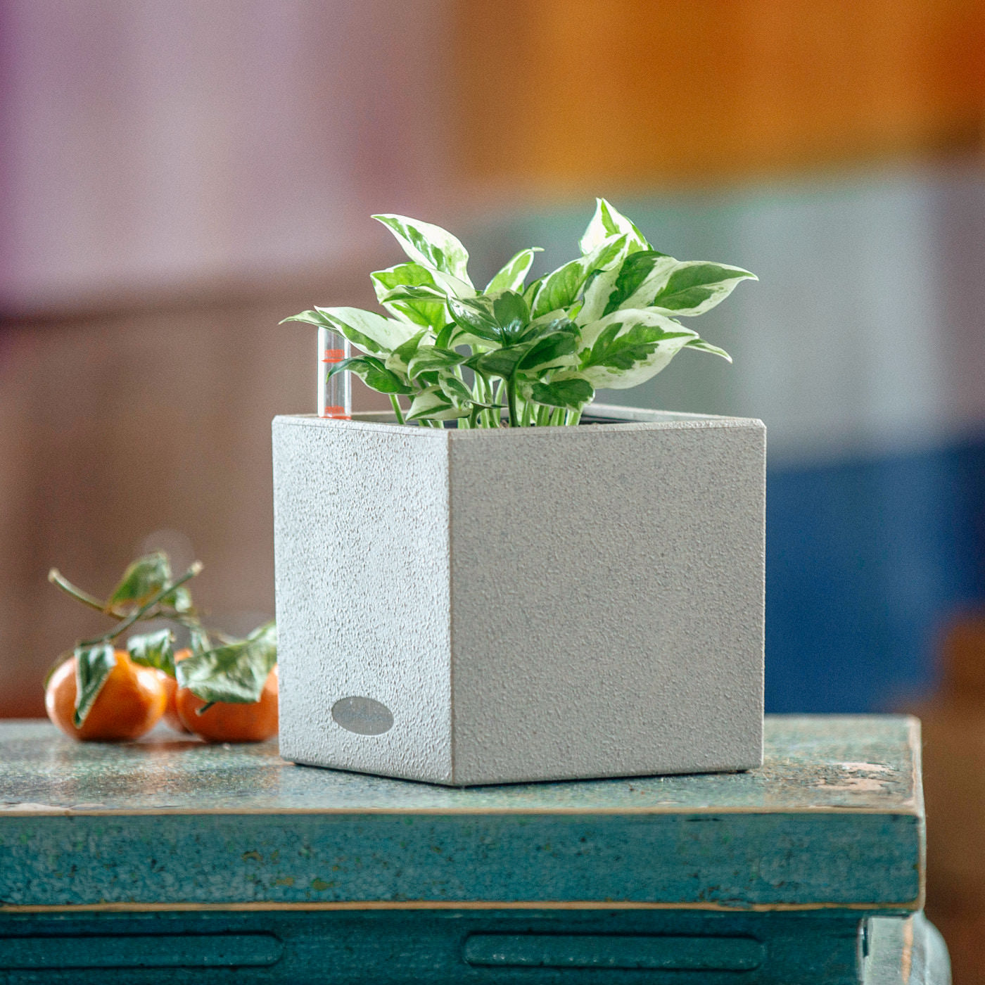 Pothos Glacier Plant In Lechuza Canto 14 Beige Planter | My City Plants