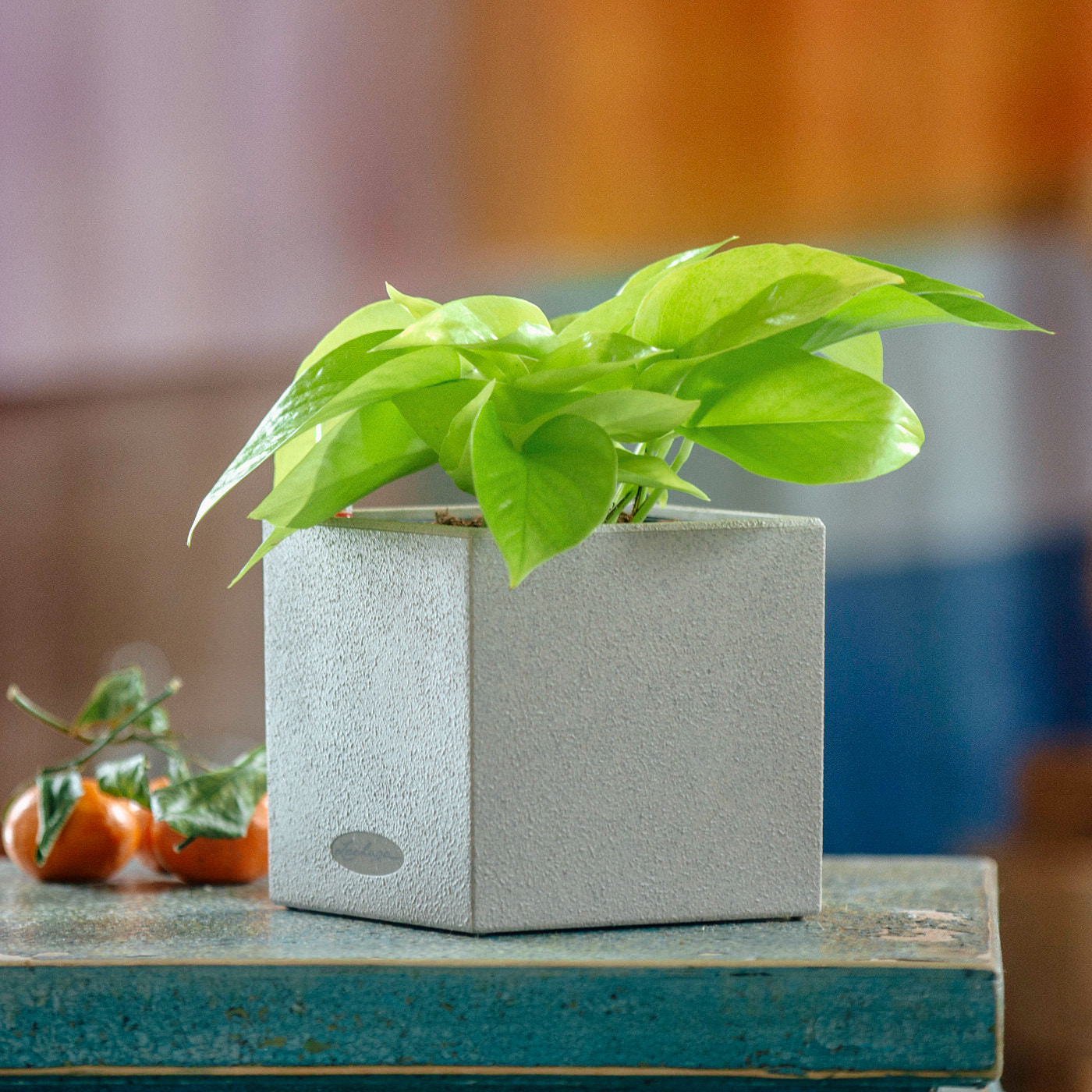 Pothos Neon Plant In Lechuza Canto 14 Beige Planter | My City Plants