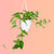 "Pothos In 4.5"" Nursery Hanging Basket 