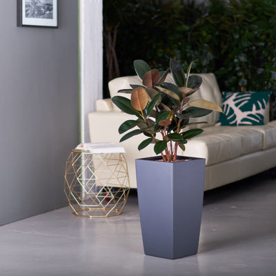 Rubber plant bush potted in Lechuza slate Cubico planter - My City Plants