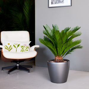 Sago Palm Classico Charcoal Metallic