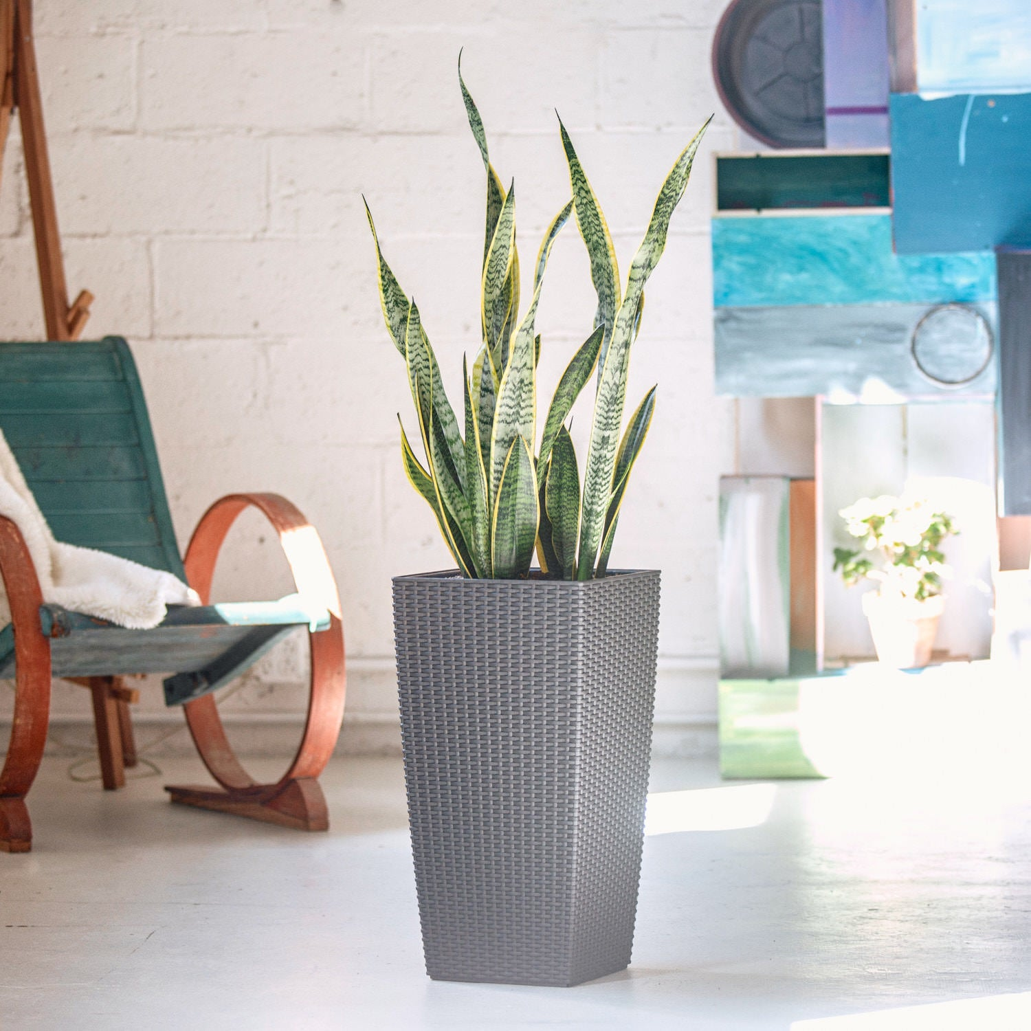 Snake plant potted in Lechuza Cubico Cottage granite planter - My City Plant