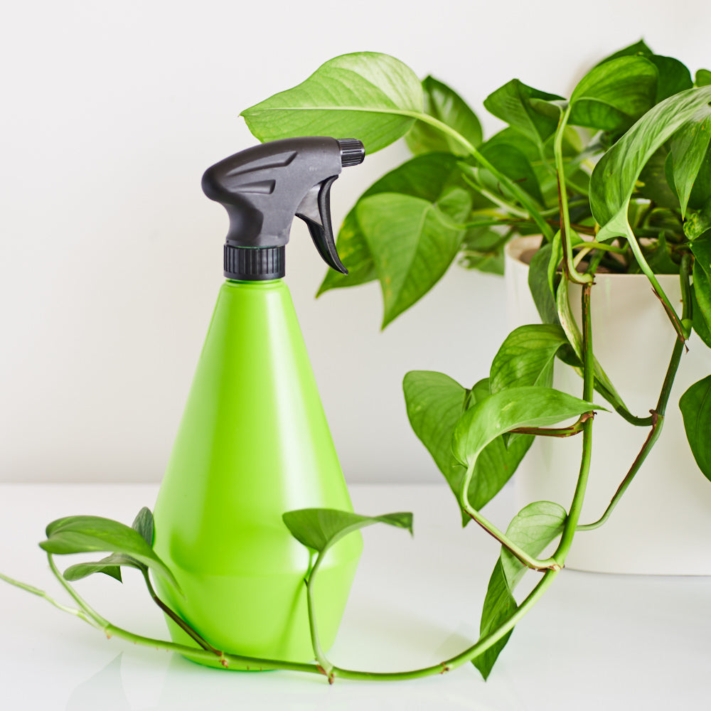 Spray Bottle For Plants - Shop Online - My City Plants