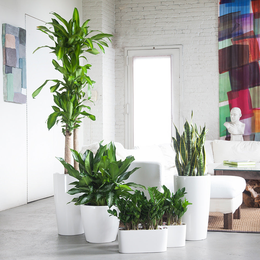 Plant Bundles - Startup Bundle 01 - Shop Online - My City Plants