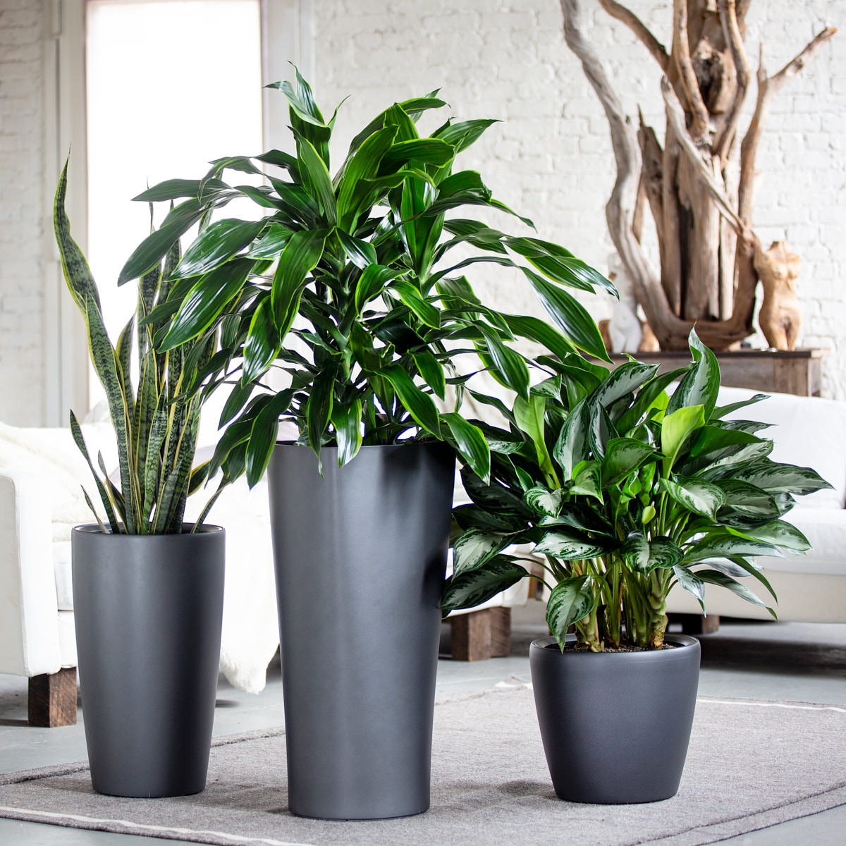 Tribeca Plant Bundle - Charcoal | 3 Plants In The Bundle - My City Plants