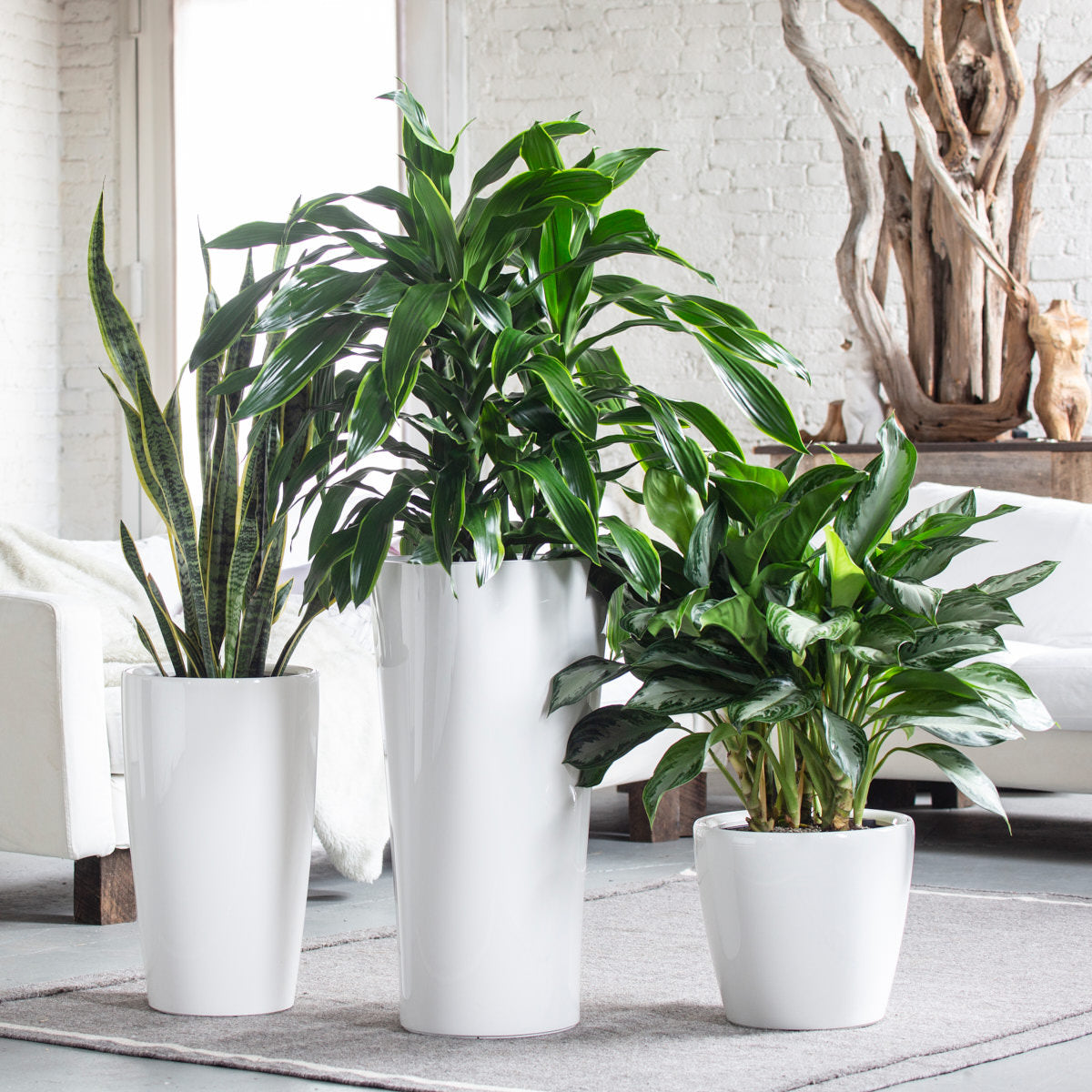 Tribeca Plant Bundle - White | 3 Plants In The Bundle - My City Plants