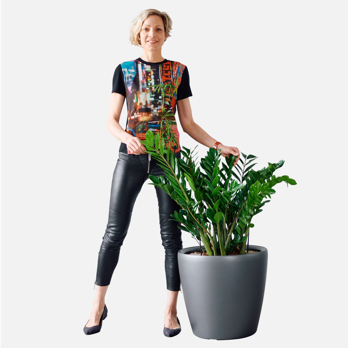 ZZ Plant Potted In Classico 50 Charcoal Planter | My City Plants