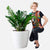 ZZ Plant Potted In Classico 50 White Planter | My City Plants