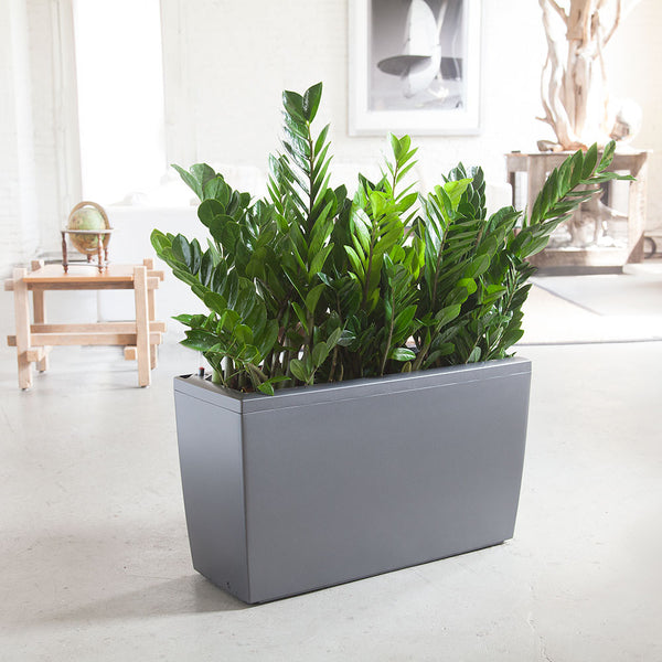Indoor Zz Plants Nyc Delivery My City Plants