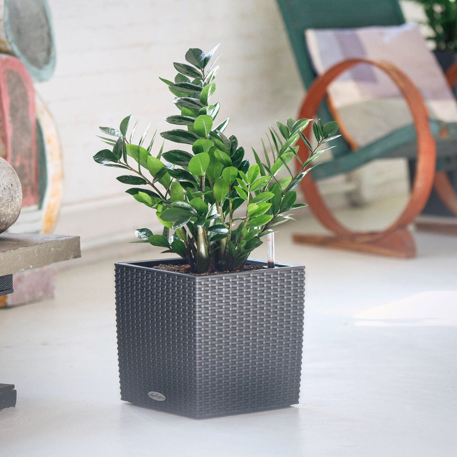 ZZ plant potted in Lechuza Cube Cottage granite planter - My City Plants