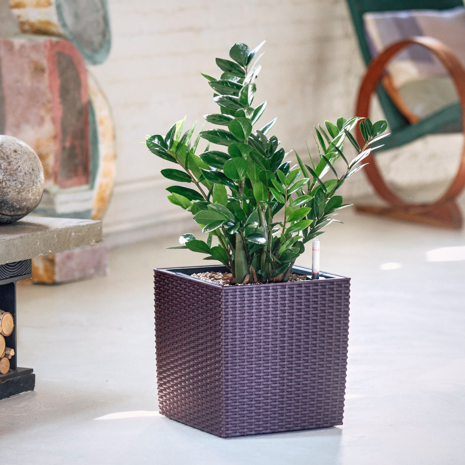 ZZ plant potted in Lechuza Cube Cottage mocha planter - My City Plants