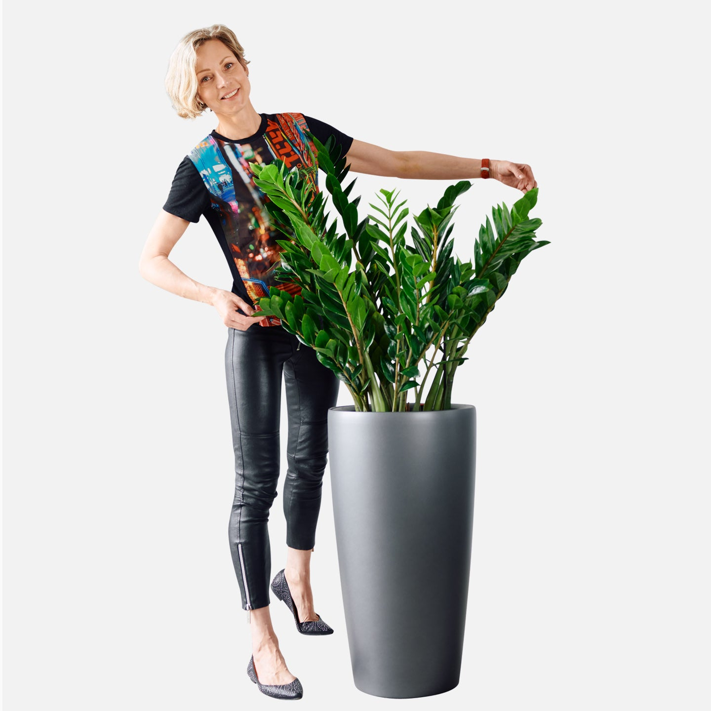 ZZ Plant Potted In Rondo 40 Charcoal Planter | My City Plants